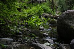 Close-up of forest stony stream in summer. Royalty Free Stock Photo