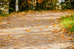 Close-up of forest trail. Road with many fallen leaves, autumn landscape and copy spase for text. Clear fall autumn day Stock Images