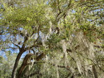 Close Up of Forest. Trees and grass in North Florida Stock Image