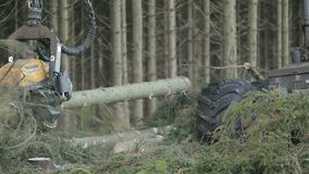 Close up on forestry harvester cutting up log. In pine woods stock video footage