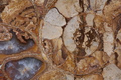 Close-up fossil ammonite. Macro close-up fossil ammonite centre swirl pattern texture multi-coloured Stock Images