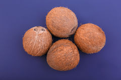 Close-up of four hard and brown coconuts on a dark purple background. Natural tropical fruit coconuts. Fresh and exotic coconuts. Stock Image