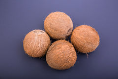 Close-up of four tropical coconuts on a dark purple background. Delicious summer fruits. Nutritious exotic nuts. Royalty Free Stock Image