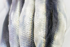 Close-up of Raw Herrings Stock Photography