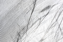 Close-up fragment feather. In high resolution Stock Photo