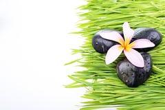 Close up Frangipani flower and black stone on grass Royalty Free Stock Photos