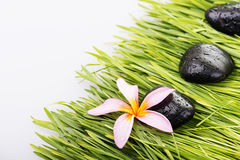 Close up Frangipani flower and black stone on grass-spa concept Stock Images
