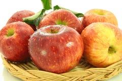 Close up fresco do fruto da maçã Imagens de Stock Royalty Free