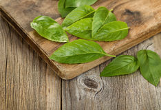 Close up fresh basil leafs on rustic serving board Royalty Free Stock Photo