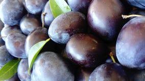 Fresh blue plums,lat. Prunus domestica royalty free stock image