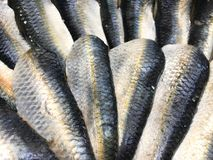 Fresh blue and silver sardines on display royalty free stock images