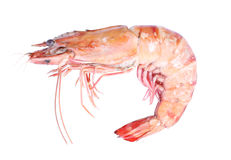 Close up of fresh boiled tiger shrimp isolated Royalty Free Stock Photo