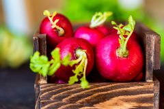 Fresh red radishes in wooden box close. Close up fresh bright red redishes in wooden box on dark wooden surface. Healthy diet concept, selective focus Royalty Free Stock Images