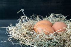 Close up of fresh brown chicken eggs in hay nest on black wooden background. Concept of organic eggs, free space for text or other royalty free stock image