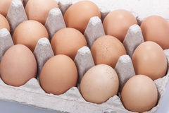 Close up of Fresh Brown Eggs in a Cardboard Tray Stock Image
