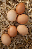 Close-up of fresh brown eggs on straw. Shot from high angle Stock Images