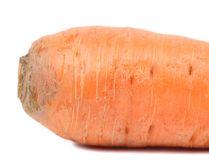 Close up of fresh carrot Stock Image