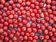 Close up of fresh cherries Royalty Free Stock Photos