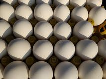 Fresh chicken eggs at Indian Street Market. Close-up of fresh chicken eggs for sale at Indian street market Stock Images