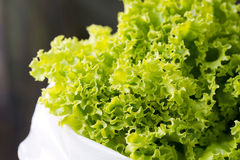 Close-up Fresh chinese cabbage. Stock Photos