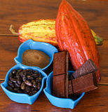 Close up of a fresh cocoa pods: dark dry cocoa bean, pieces of chocolate and powdered cocoa inside of a blue plastic Stock Photography