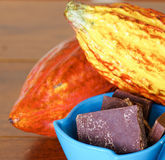 Close up of a fresh cocoa pods and some cocoa pieces of chocolate inside of a blue plastic bowl.  Stock Photos