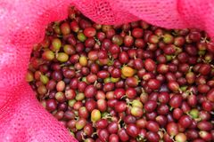Close up of  fresh coffee beans stock images