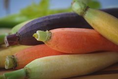 Close up of fresh colorful carrots. Purple, orange, and yellow carrots fresh and ready for cooking and eating Stock Images