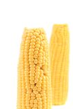 Close up of fresh corn ear. Royalty Free Stock Photos