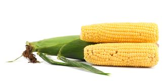 Close up of fresh corn ears. Stock Images