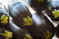 Fresh crop of raw green zucchini vegetables royalty free stock image
