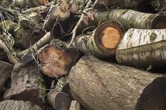 Close up of a fresh cut wood stack waiting to be burned. royalty free stock photos