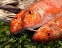 Close up of fresh fish. Close up of three raw fresh fish lying on herbs Royalty Free Stock Image