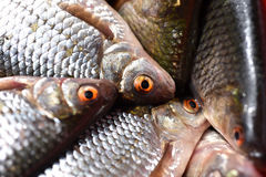 Close-up of fresh fish Royalty Free Stock Photography