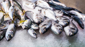 Close up of fresh fish on market stall Royalty Free Stock Image