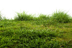 Close up of fresh  grass Stock Photography