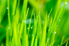 Close up of fresh grass Stock Images