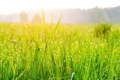 Close-up of fresh grass Royalty Free Stock Photography