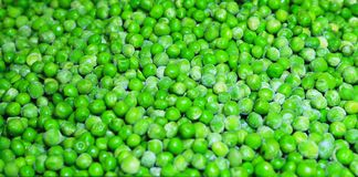 Close up of fresh green broad beans Stock Images