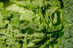 Close up of fresh green cabbage leaves. Close up of the crumpled leaves of a cabbage, fresh and very green Royalty Free Stock Image