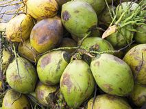 Close up of fresh green coconuts Royalty Free Stock Photo