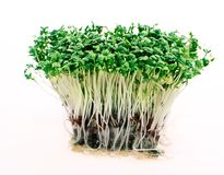 Close up of fresh green cress Stock Photo