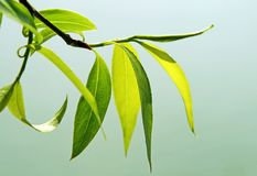 Close up of fresh green foliage Stock Images