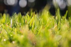 Fresh green grass and bokeh. Close up of Fresh green grass and bokeh. macro photography royalty free stock photo