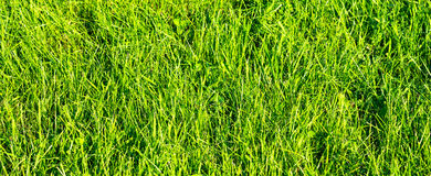 Close up on fresh green grass Stock Image