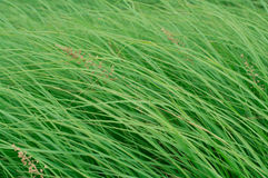 Close up on fresh green grass texture background Royalty Free Stock Photo