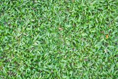 Close up fresh green grass texture Stock Photography
