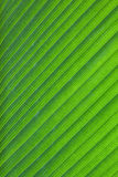 Close-up of fresh green leaf as background. Stock Photo