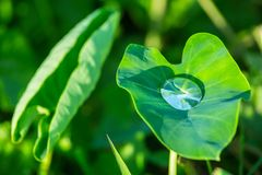 Close-up of fresh green leaf with rain drops Royalty Free Stock Photo