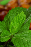 Close up of fresh green mint leaves on food Royalty Free Stock Photography
